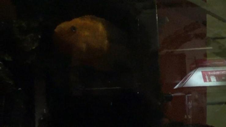 the fish.00_03_41_13.Still001